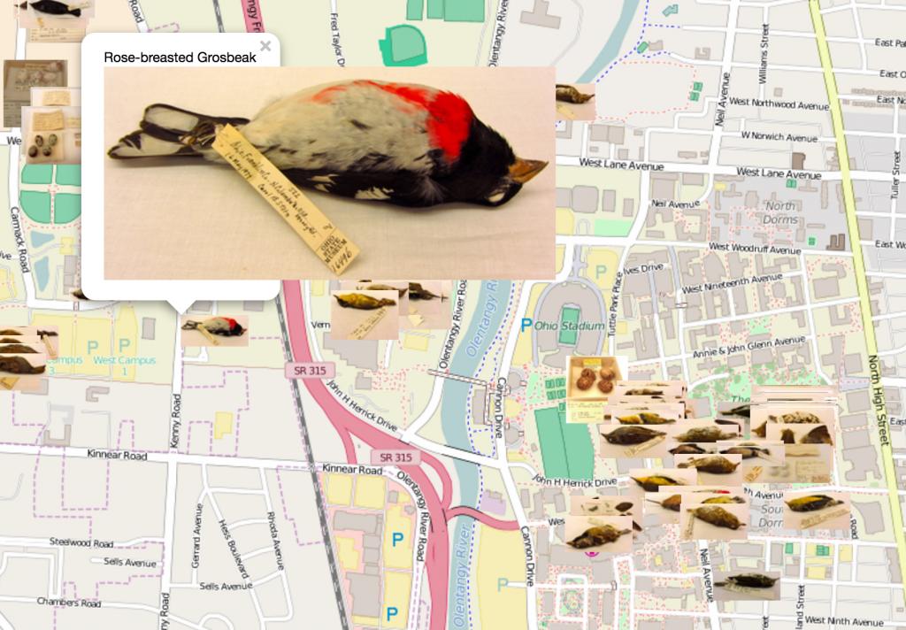 deadbirdmap